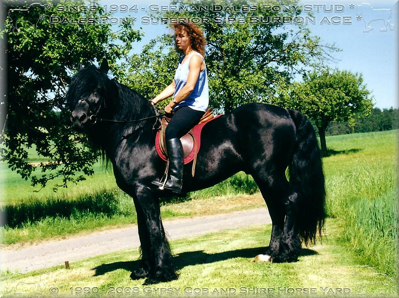Herzlich Willkommen auf dem Tinker Pony & Shire Horse Hof  Lernen Sie auf meinen websites, die sehr seltene Pferderasse der Dales Pony kennen und lieben.