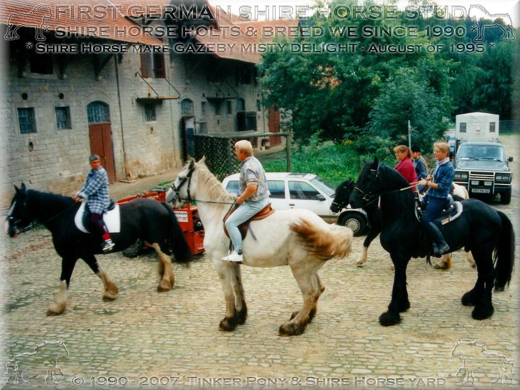 Herzlich Willkommen im Tinker Pony und Shire Horse Hof