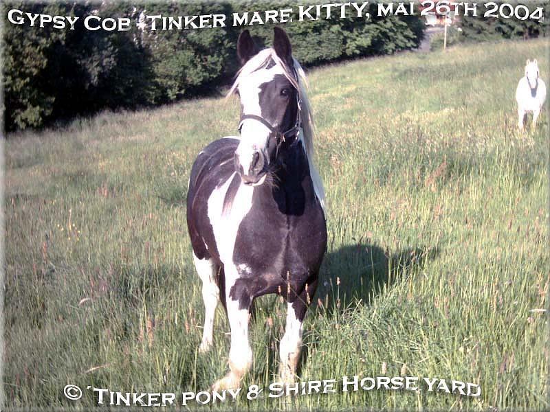 Heartily welcome on the former Gypsy Cob and Shire Horse yard. - Gypsy Cob Stute KITTY am 26. Mai 2004 auf Ihrer Weide, im Pferdeparadies der Weils Glänzer Mühle in Kirtorf