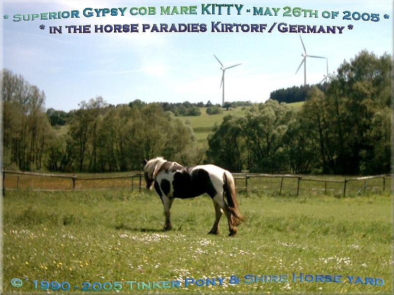 Herzlich Willkommen auf dem Tinker Pony & Shire Horse Hof - Gypsy Cob - Tinker Stute KITTY am 26. Mai 2005 auf Ihrer mit Kräutern blühenden Frühlingsweide, im Pferdeparadies der Weils Glänzer Mühle, in Kirtorf