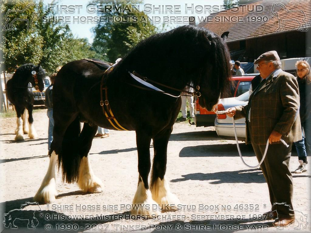 Horst Schäfer mit Powys Duke Stud Book no 46352, im September 1997