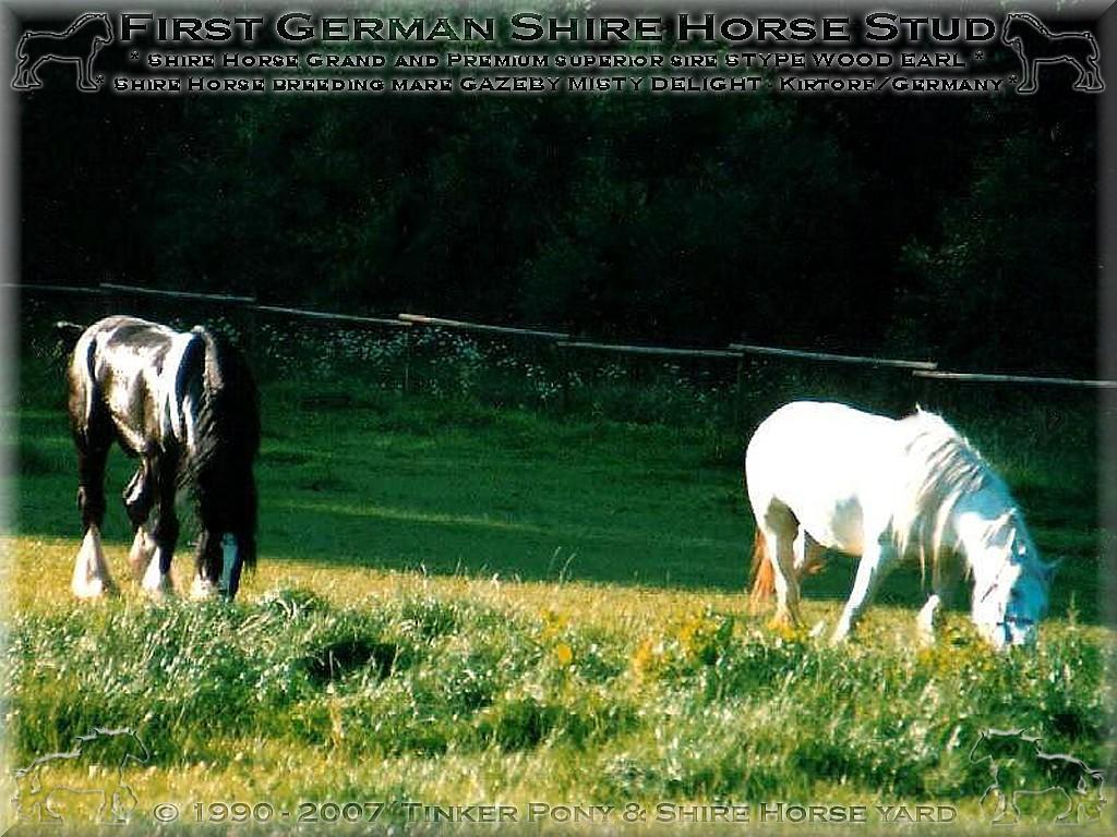 & Shire Horse Hof - Shire Horse, Shire Horse Herkunft, <b>Shire Horse Zucht</b>, Shire Horse Haltung, Shire Horse zuechten wir seit 1990.