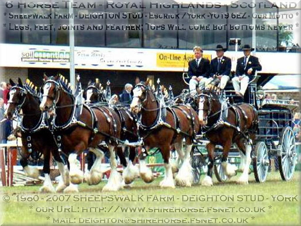 Deighton Stud - 6 Horse Team Royal Highlands Scotland - Legs, feet, joints and feather; Tops will come but bottoms never