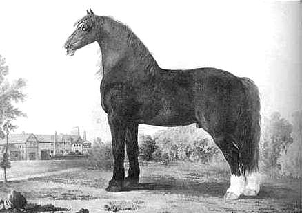 Cart Horse (Shire Horse) sire Gee, 1891 in the age of 6 years