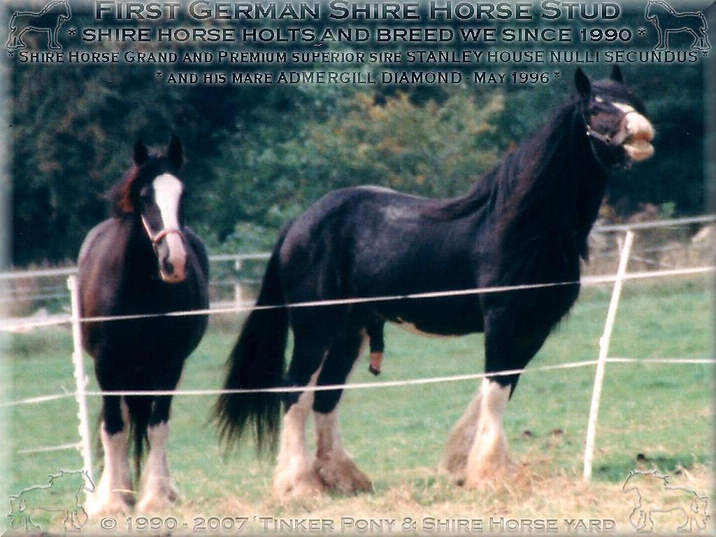 Herzlich Willkommen auf dem Tinker Pony & Shire Horse Hof - Shire Horse Grand & Premium Zuchthengst Stanley House Nulli Secundus - Shire Horse Zuchtgestüt im Pferdeparadies des Rittergut Lehrbach