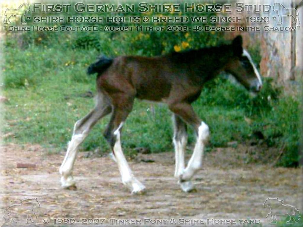 Herzlich Willkommen im Tinker Pony & Shire Horse Hof
