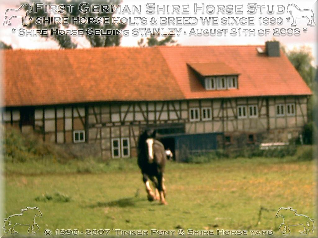 Herzlich Willkommen auf dem Tinker Pony & Shire Horse Hof - Shire Horse Hengst SUNSHINE am 26. Mai 2005 - auf einer Seiner zahlreichen Weiden im Pferdeparadies Kirtorf