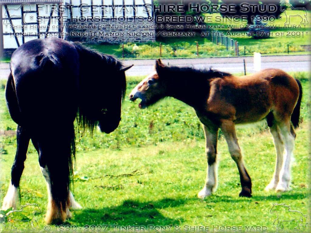 Heartily welcome on the former Gypsy Cob and Shire Horse yard. Shires breeding and sale, since 1990.