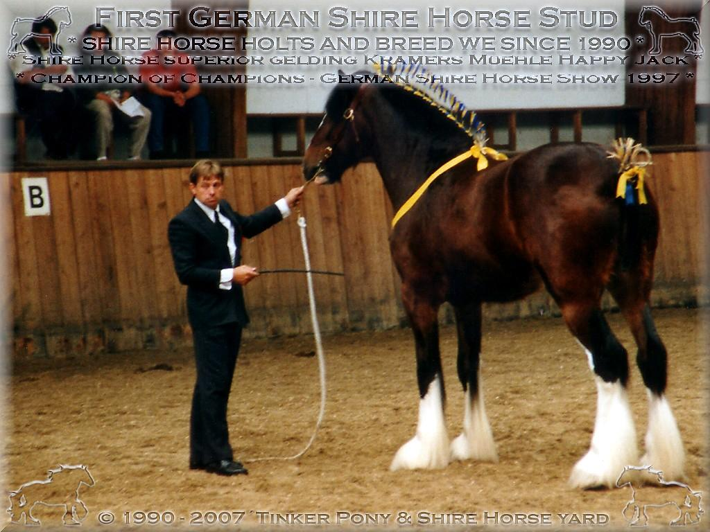 Shire Horse gelding * the for the race of the Shire Horse exemplary * Kramers Muehle Happy Jack - Champion of Champions of Show, in September 1997, in Darmstadt-Kranichstein - Germany.(Champion of Champions of Show - also if the poor Mrs. Dr. [Jutta Söntgen] (Jung) here-at almost before fury the hit met!)