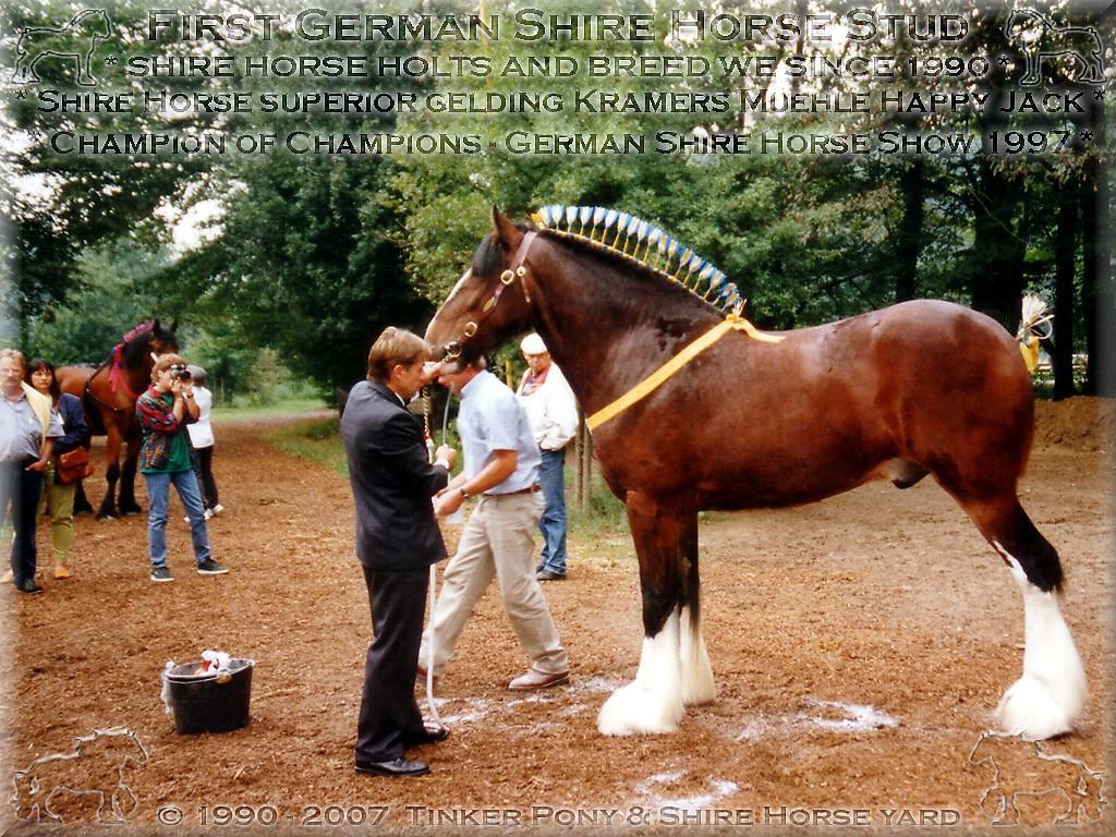 Mein Shire Horse gelding * der für die Rasse der Shire Horse beispielhafte * Kramers Muehle Happy Jack - Champion of Champions of Show, im September 1997, in Darmstadt-Kranichstein - Germany.(Auch wenn die arme Frau Dr. Jutta Sßntgen(Jung) hierbei fast der Schlag traf!)