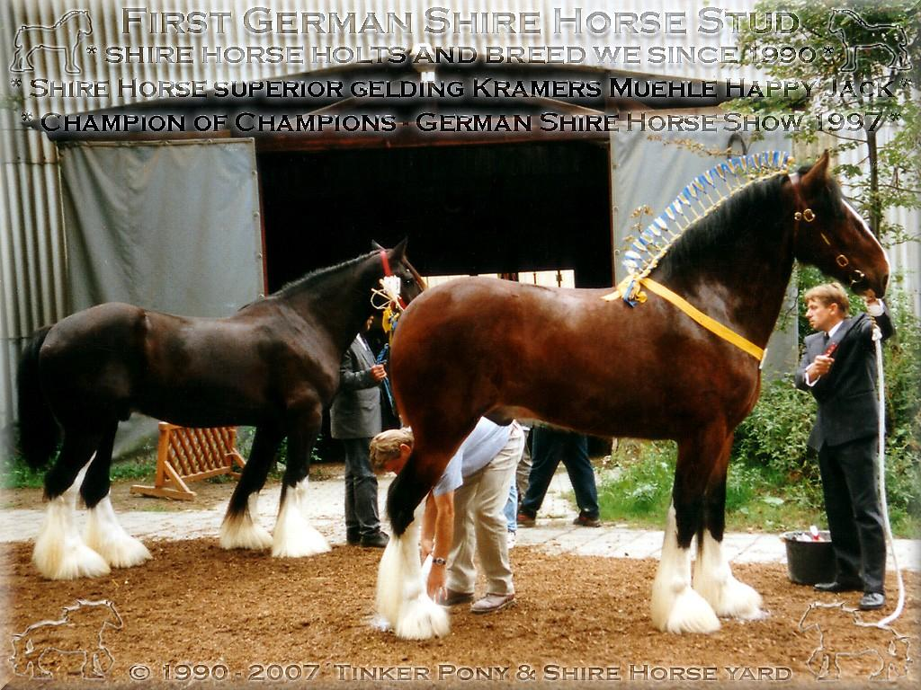 Deighton Stud - Legs, feet, joints and feather; Tops will come but bottoms never