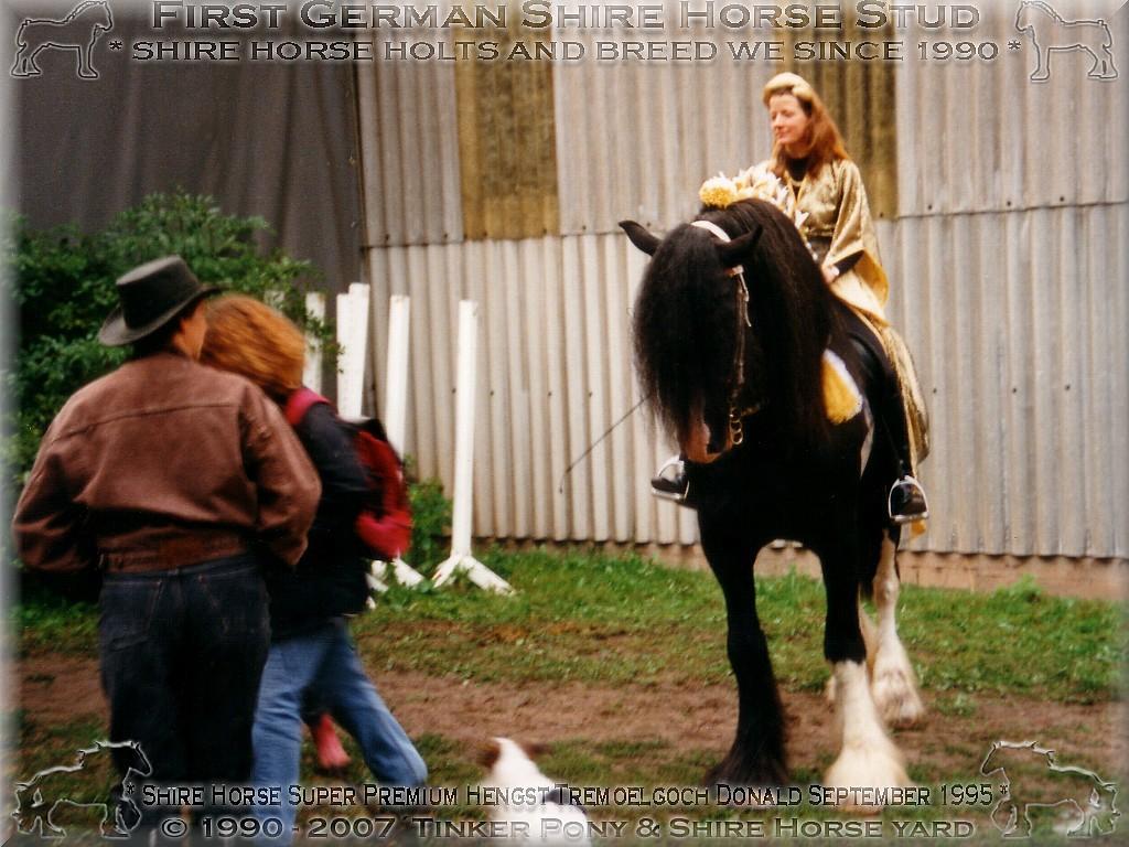 Shire Horse, Shire Horse Herkunft, Shire Horse Zucht, Shire Horse Haltung, Shire Horse zuechten wir seit 1990.