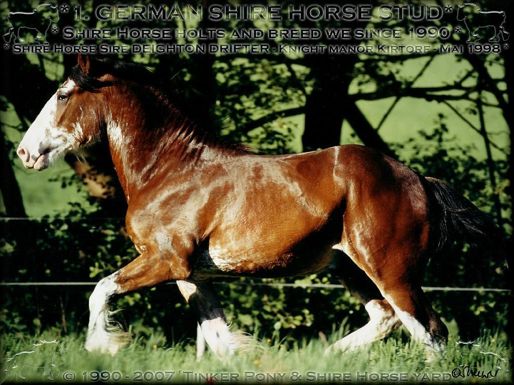 Herzlich Willkommen auf dem Tinker Pony & Shire Horse Hof.