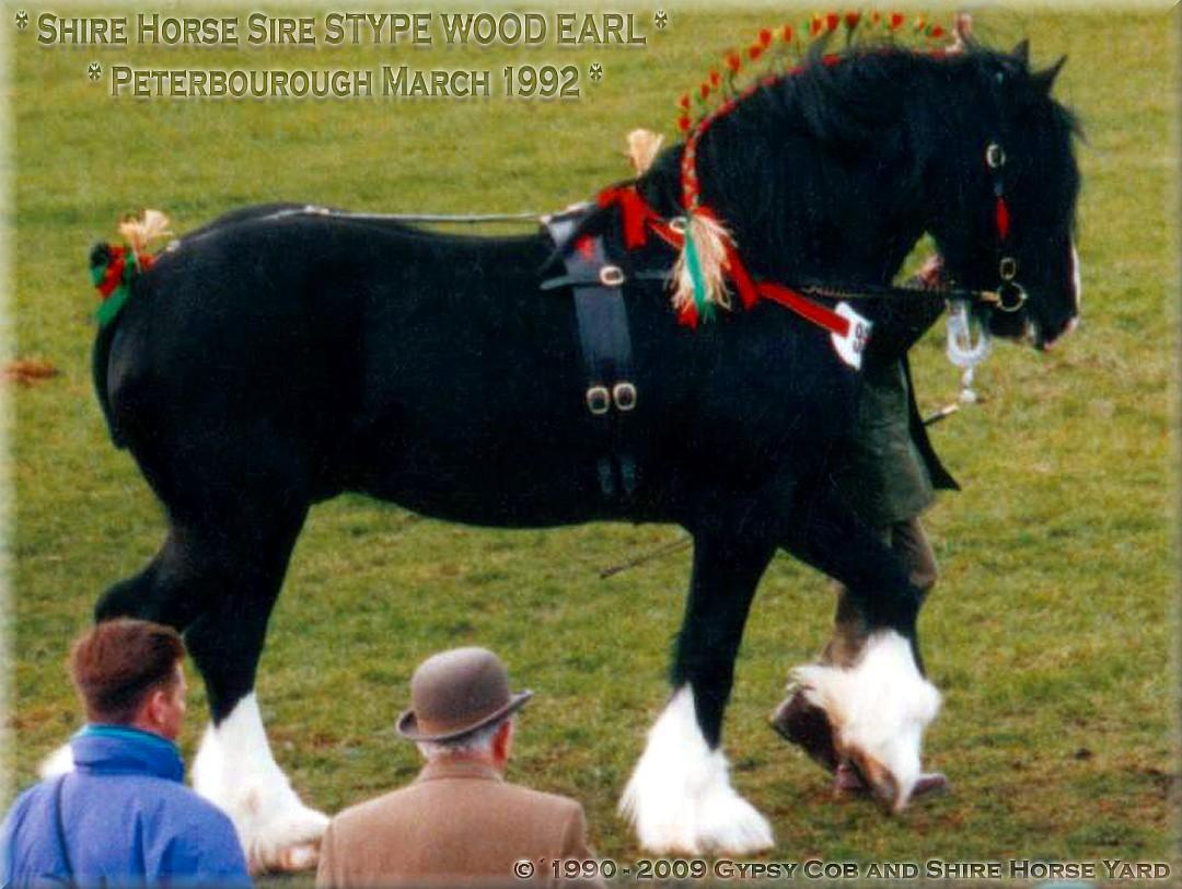 Heartily welcome on the former Gypsy Cob and Shire Horse yard.- Heartily welcome on the Tinker pony & Shire Horse yard - Shire Horse Sire Stype Wood Earl, Peterborough March 1992