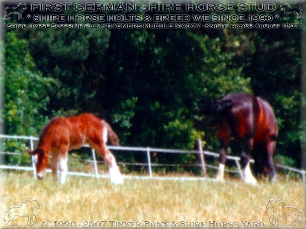 Herzlich Willkommen auf dem Tinker Pony & Shire Horse Hof - Meine beiden <b>Shire Horse Zuchtstute</b>n Admergill Diamond(links) und Eskape Margaret Rose, mit Ihren Fohlen Discovery und Marcy, im July 1997 auf dem Rittergut-Lehrbach.