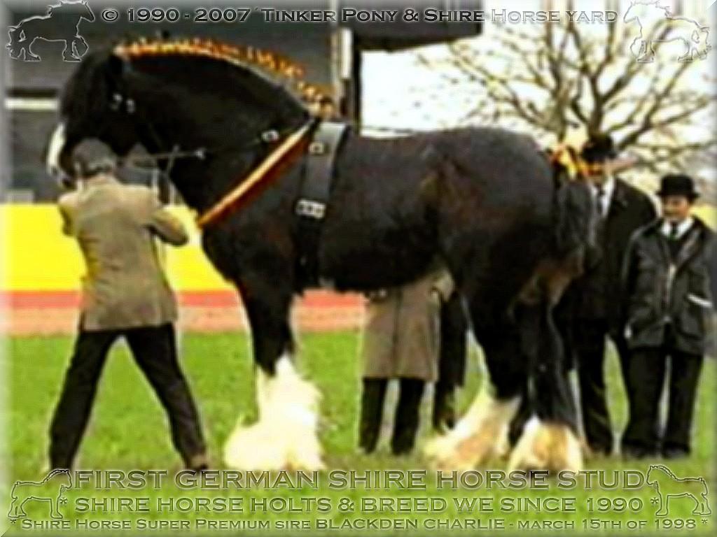 *** Herzlich Willkommen im Tinker Pony & Shire Horse Hof *** 22 Jahre landwirtschaftliche <b>Shire Horse Zucht</b> und Haltung in Deutschland ***