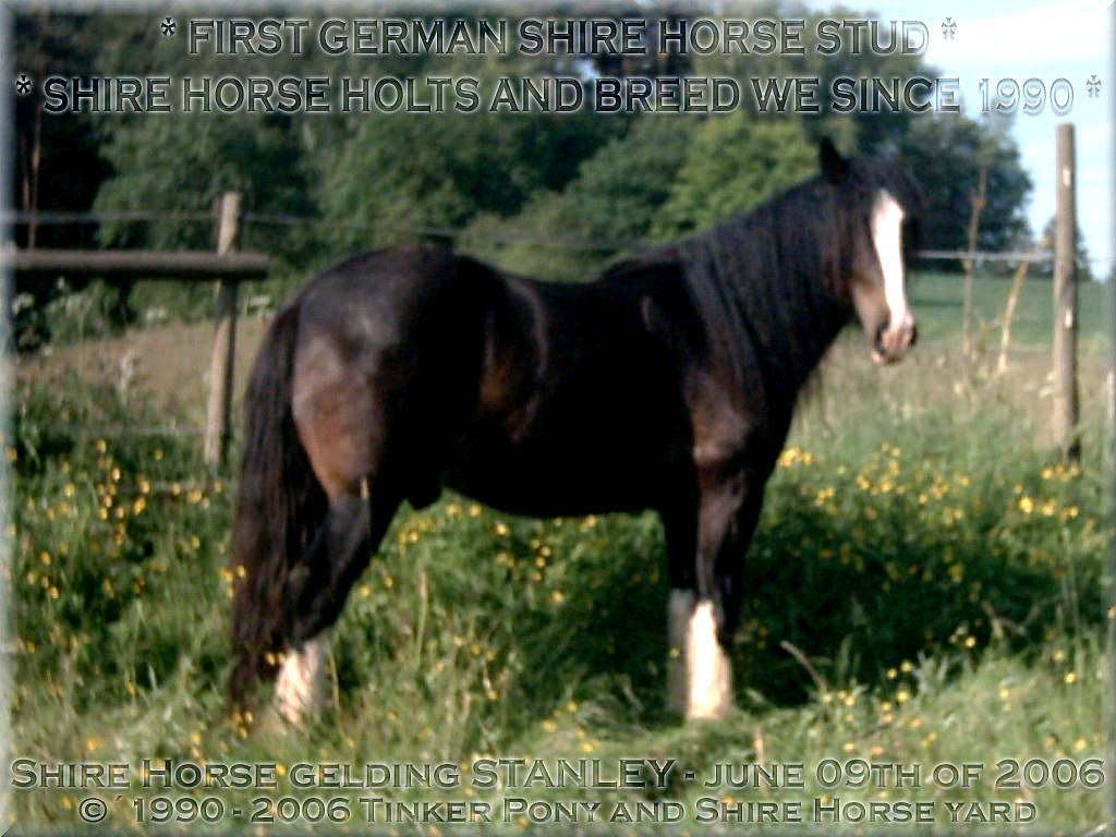 """Herzlich Willkommen auf dem Tinker Pony & Shire Horse Hof - Auf den Fotos sehen Sie den """"seit 1996 unerwünschten, aktuellen Müll"""" des <b>Deutschen Shire Horse Verein e.V.</b>! - den <b>Shire Horse Hengst</b> KRAEMERS MUEHLE STANLEYund den Shire Horse Hengst Kraemers Muehle Sunshine am 08. Juni 2005, auf einer Ihrer zahlreichen Weiden, im Pferdeparadies der Weils Mühle in Kirtorf-"""