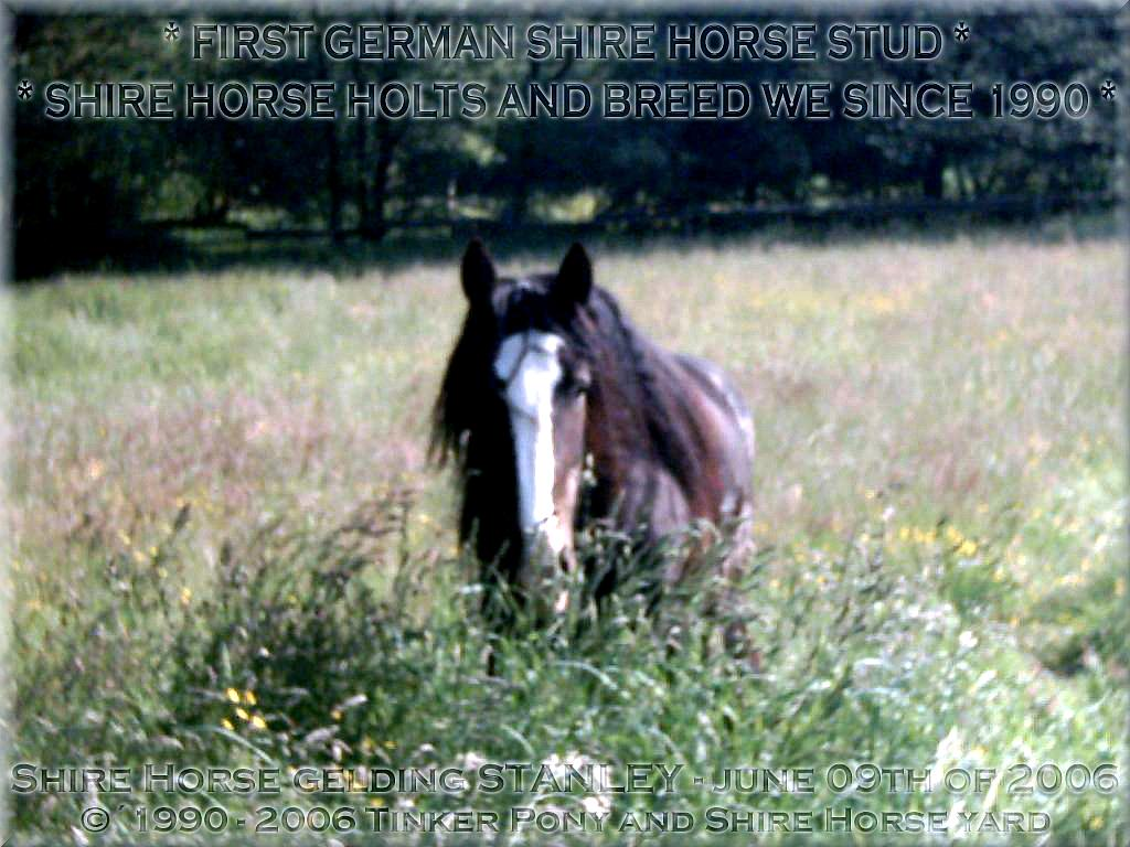 Heartily welcome on the former Gypsy Cob and Shire Horse yard.