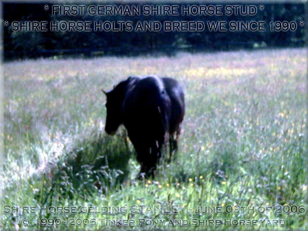 """Herzlich Willkommen auf dem Tinker Pony & Shire Horse Hof - Auf den Fotos sehen Sie den """"seit 1996 unerwünschten, aktuellen Müll"""" des <b>Deutschen Shire Horse Verein e.V.</b>! - den <b>Shire Horse Hengst</b> KRAEMERS MUEHLE STANLEY und den Shire Horse Hengst Kraemers Muehle Sunshine am 08. Juni 2005, auf einer Ihrer zahlreichen Weiden, im Pferdeparadies der Weils Mühle in Kirtorf"""