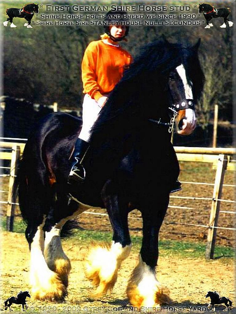 Shire Horse Yard, Shire Horse stand, Shire Horse Breeding - Heartily welcome on the Tinker pony & Shire Horse yard - Shire Horse Grand & Premium Sire Stanley House Nulli Secundus - Shire Horse studfarm into the horse-paradise of the knight manor Lehrbach - April 1997