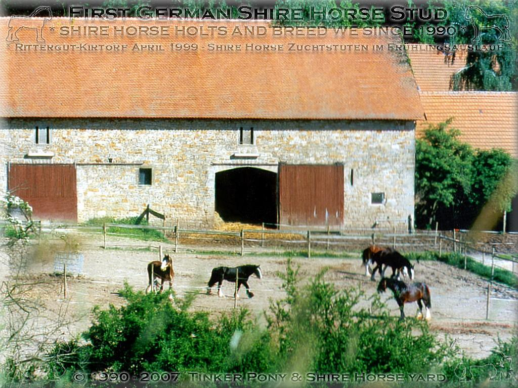 Herzlich Willkommen auf dem Tinker Pony & Shire Horse Hof