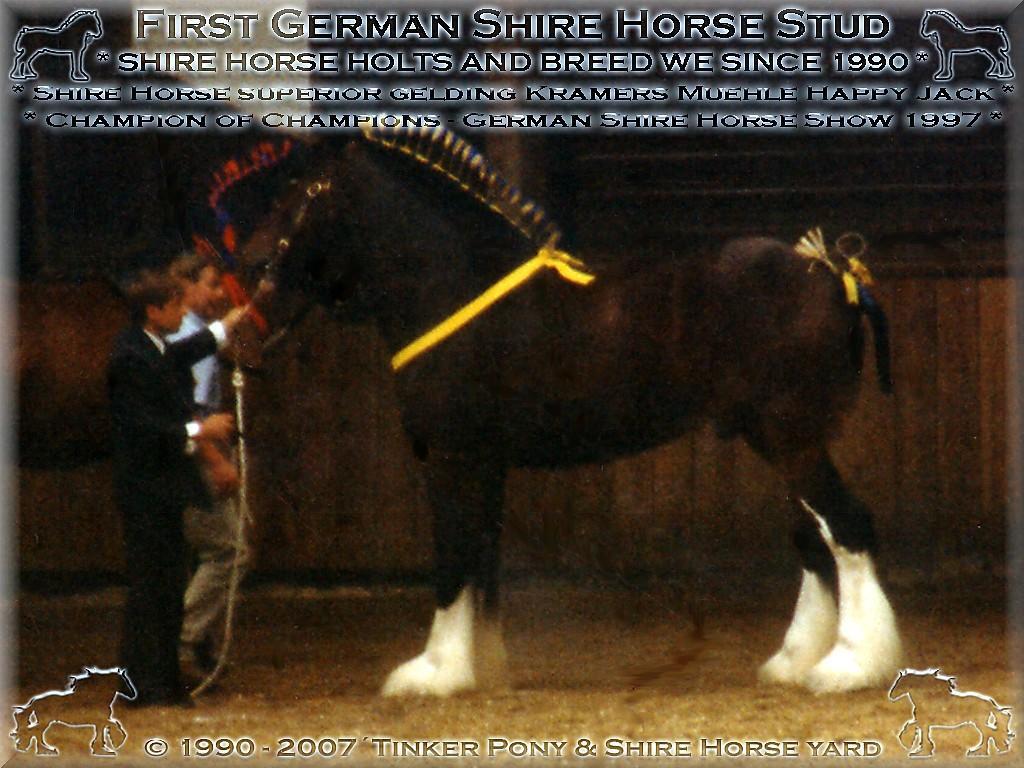 Mein Shire Horse gelding * der für die <b>Rasse der Shire Horse</b> beispielhafte * Kramers Muehle Happy Jack - Champion of Champions of Show, im September 1997, in Darmstadt-Kranichstein - Germany.(Auch wenn die arme Frau Dr. Jutta Söntgen(Jung) hierbei fast der Schlag traf!)