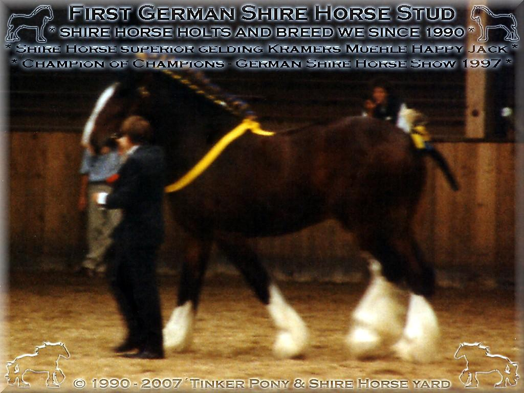 Mein Shire Horse gelding * der für die Rasse der Shire Horse beispielhafte * Kramers Muehle Happy Jack - Champion of Champions of Show, im September 1997, in Darmstadt-Kranichstein - Germany.(Auch wenn die arme Frau Dr. Jutta Süüüntgen(Jung) hierbei fast der Schlag traf!)