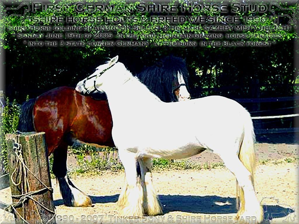 Herzlich Willkommen auf dem Tinker Pony & Shire Horse Hof - Alte Liebe rostet nicht - zumindest nicht bei dem einmaligen, ehemaligen Shire Horse Zuchthengst Sladbrook Select und seiner pers�nlichen Lebenspartnerin, der Shire Horse Zuchtstute Gazeby Misty Delight, die bereits von Juni 1996 bis Mai 2003 ein gl�ckliches Paar waren und Dies seit April 2005 wieder sind.