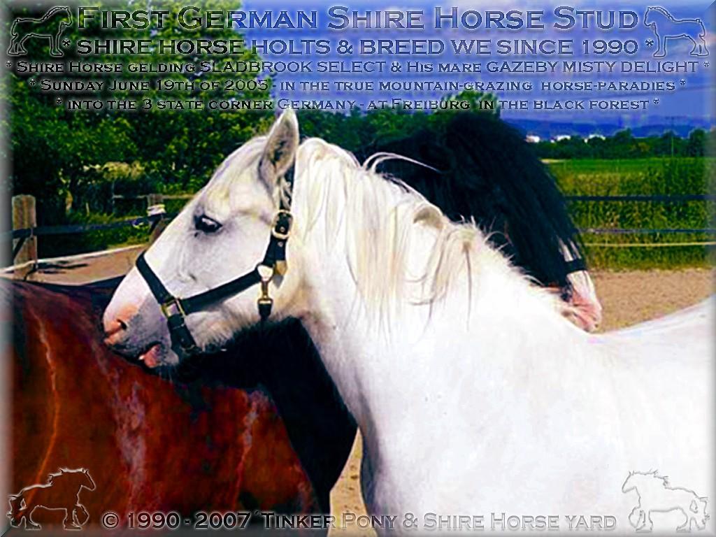 Shire Horse Zucht, Shire Horse Haltung und Shire Horse Verkauf seit 1990