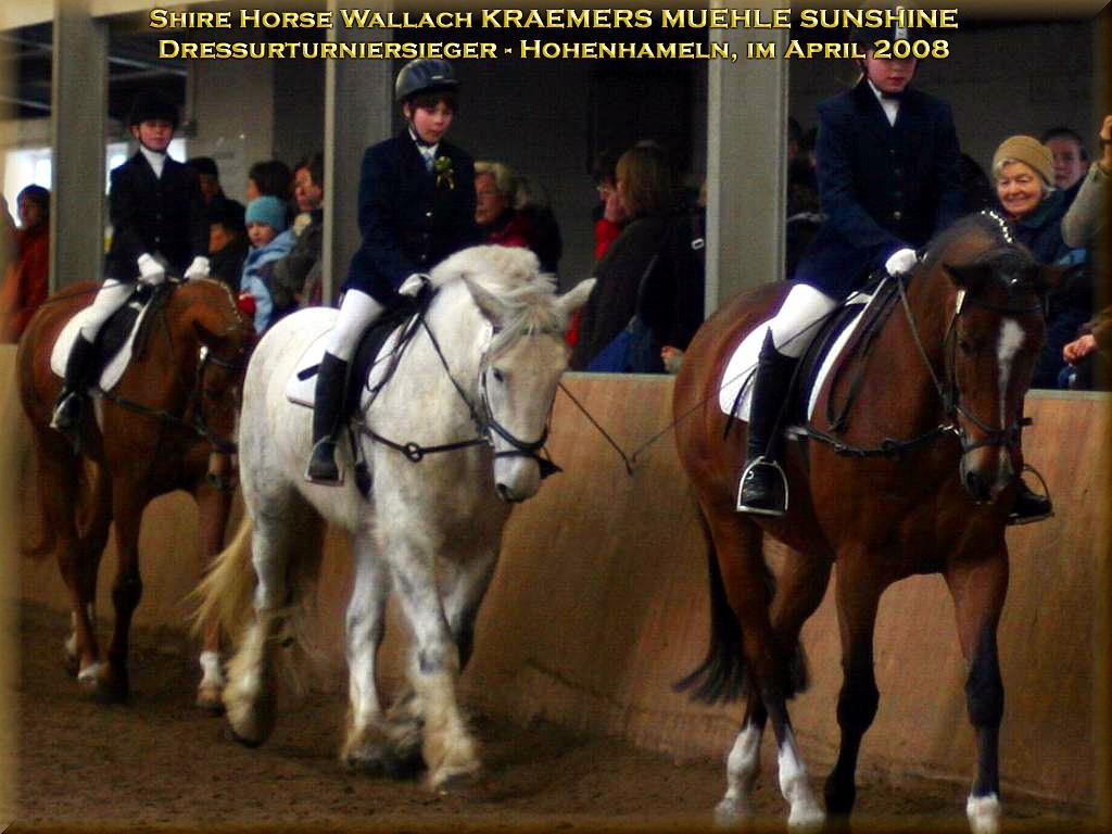 Shire Horse gelding Kraemers Muehle Sunshine, Winners of the education-tournament, in Hohenhameln Germany, in April of 2008.