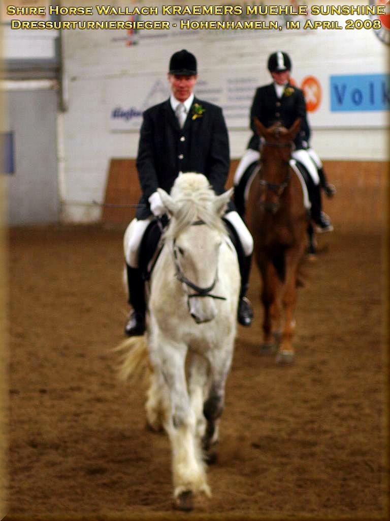 Shire Horse Wallach Sunshine, Sieger des Dressurturniers in Hohenhameln, im April 2008.