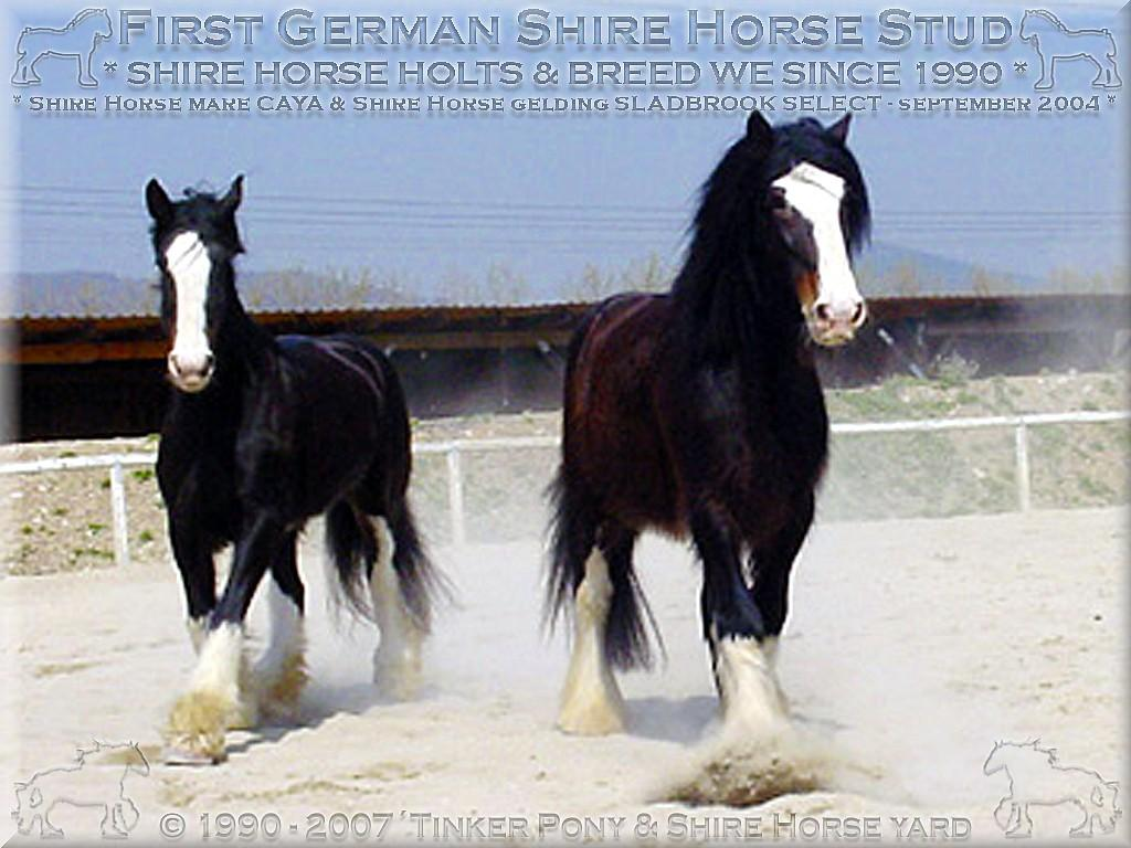 Heartily welcome on the former Gypsy Cob and Shire Horse yard