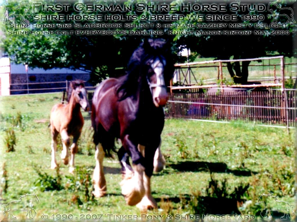 Heartily welcome on the former Gypsy Cob and Shire Horse yard - Mein dritter Shire Horse  Zuchthengst Sladbrook Select und  seine Familie, im April 2000
