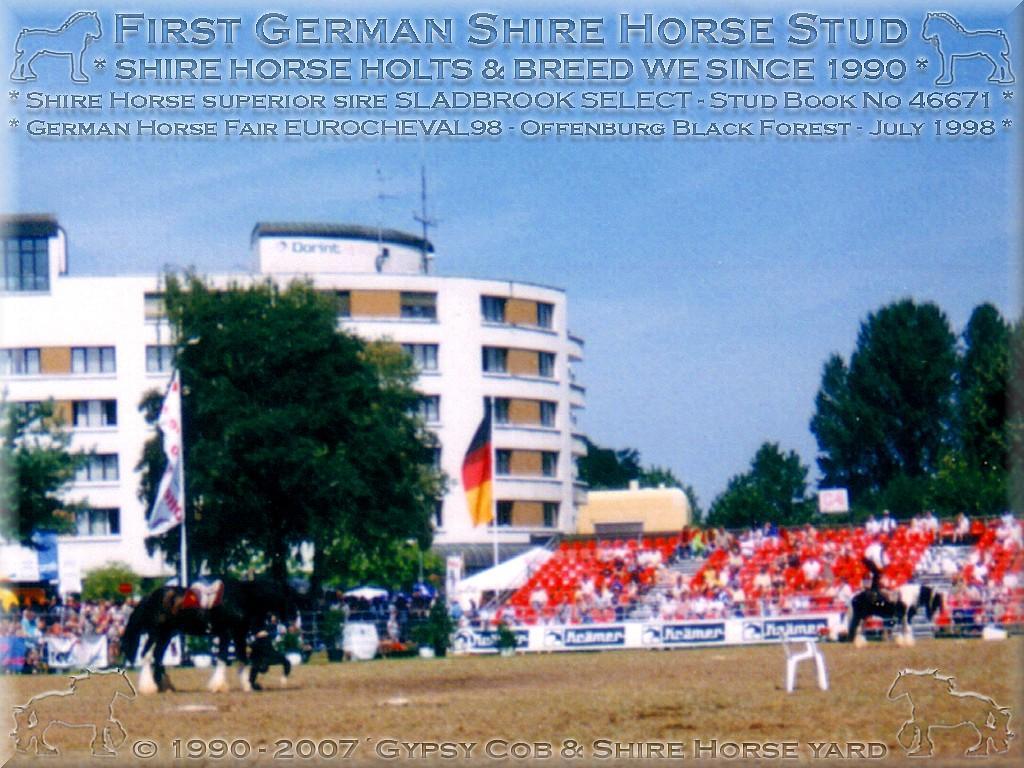 """Die Beteiligung meines Pferdezuchtgestütes, während der Eurocheval 1998, in Offenburg, zu Füßen des Schwarzwaldes, mit unseren drei gestütseigenen Zuchthengsten, war ein überwältigender Erfolg für die <b>Rasse der Shire Horse</b>. 12 meiner geliebten Shire Horse wurden mir unmittelbar nach der Präsentation - von begeisterten Shire Horse Fans - """"abgeschwatzt""""."""