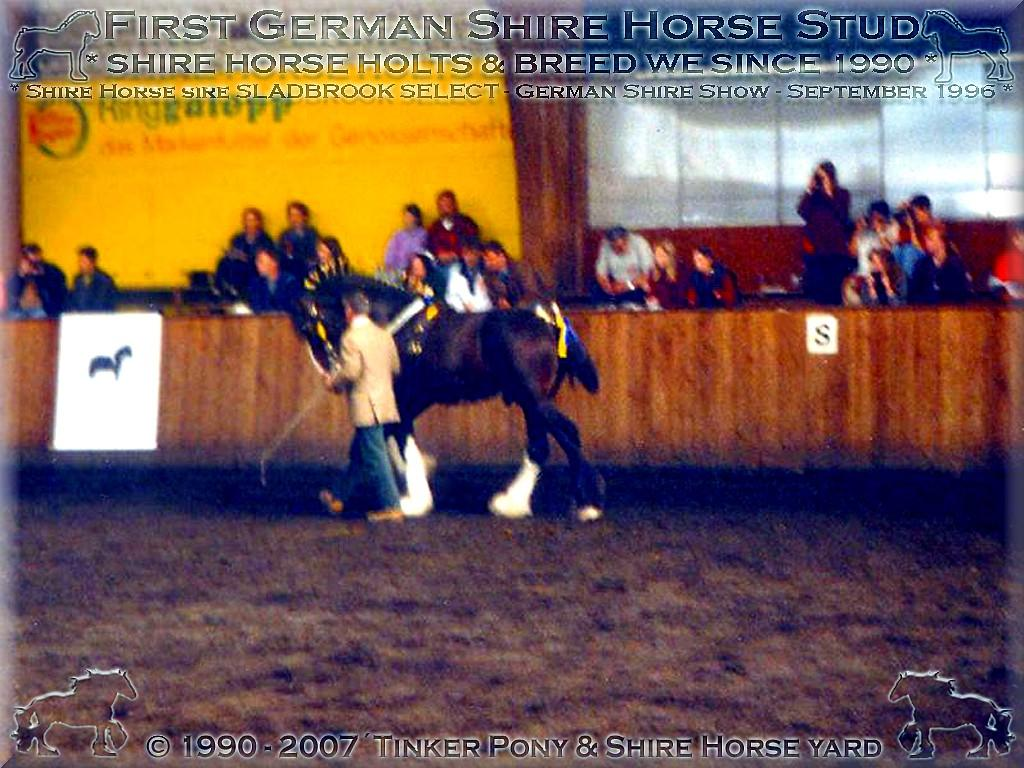 Herzlich Willkommen auf dem Tinker Pony & Shire Horse Hof - Shire Horse Schau 1996