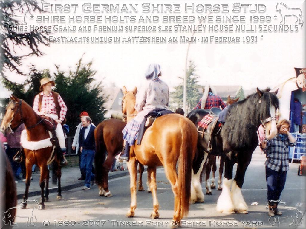 Shire Horse Herkunft, Shire Horse Zucht, Shire Horse Haltung, Shire Horse zuechten wir seit 1990.