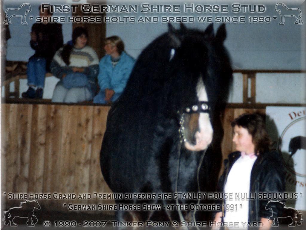 Herzlich Willkommen auf dem Tinker Pony & Shire Horse Hof - Shire Horse Grand & Premium Zuchthengst Stanley House Nulli Secundus, Oktober 1991