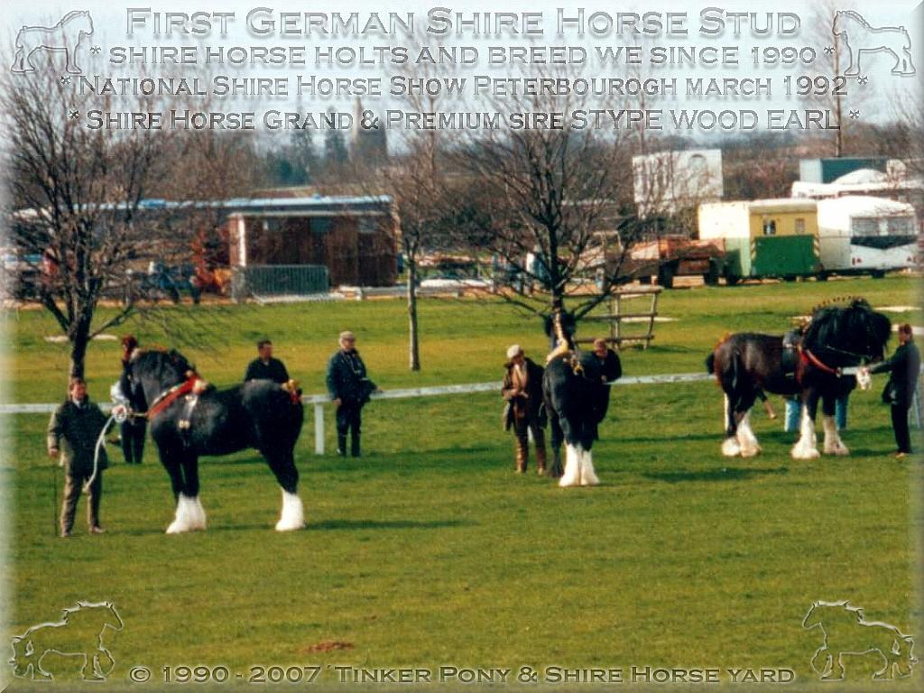 Mein zweiter <b>Shire Horse Zuchthengst</b>, der unvergleichliche Grand und Premium Shire Horse sire Stype Wood earl - Stud book no 46295, im März 1992 auf der National Shire Horse show in Peterborough.