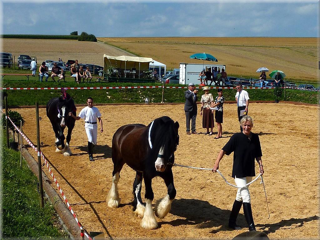 Shire Horse Society Judge Mister Jim Yates sieht den Shire Horse Sire Sladbrokk Select, nach 13 Jahren, noch einmal auf dem Duddelhof wieder.