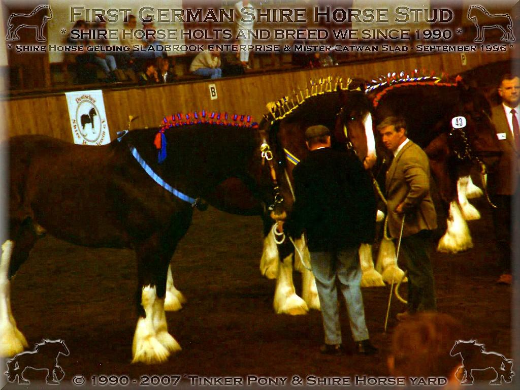 Shire Horse Zucht, Shire Horse Haltung, Shire Horse Verkauf seit 1990