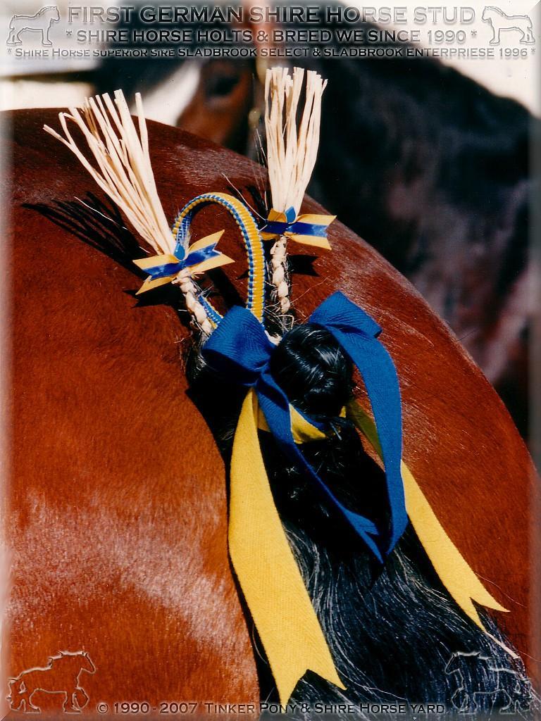 Herzlich Willkommen auf dem Tinker Pony & Shire Horse Hof - Mein 3. Shire Horse Zuchthengst SLADBROOK SELECT Stud Book No 46671, im Mai 1997 - im Pferdeparadies des Rittergutes Lehrbach.