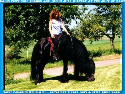 Dales pony gelding SUNNY, ages of 5 years, born into the April of 1999, son of Burdon Ace circumstances-half to deliver. Sunny are Terrains - & street - sure rides and has at numerous Party- move, without problems, part-takes. The pictured photo, of Sunny, is of the May 28. of 2004.