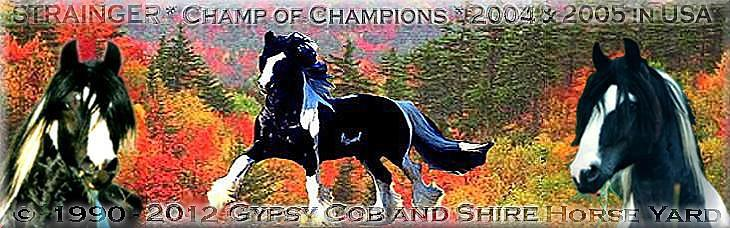 Your search a Gypsy Cob - Tinker - Shire Horse? - WE offer only the best worldwide!
