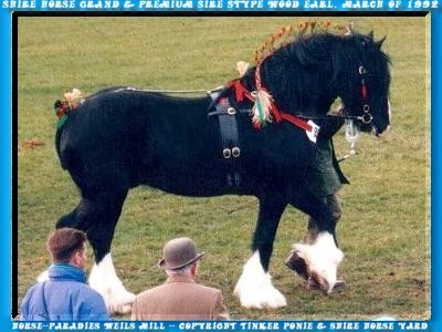 In the Slideshow you can yourself, with 24 photo of March of 1992 until July of 1996, in 5 minutes a picture of the former Shire Horse Grand and Premium Sire STYPE WOOD EARL does.