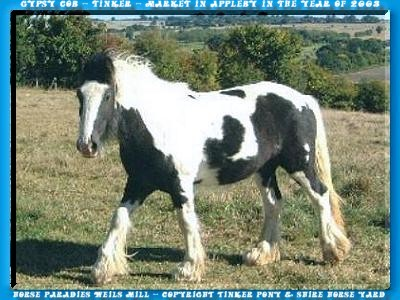 In the Slideshow you can yourself, with 30 photo of the Gypsy Cob market into the June of 2003 in Appleby, a little picture of the biggest English horse-market does.