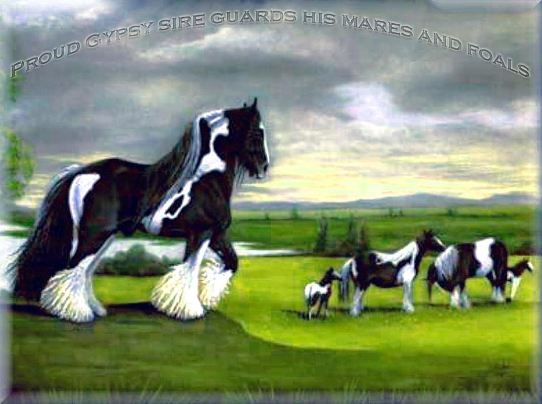 Strainger are a Gypsy Cob - Tinker sire of the superlatives - His son Shannon will surpass in exterieur and charisma Him! - Your search a Gypsy Cob? - WE offer only the best worldwide!