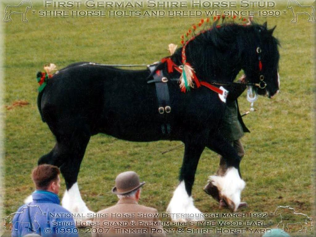 Shire Horse Sire Stype Wood Earl, Peterborough March 1992