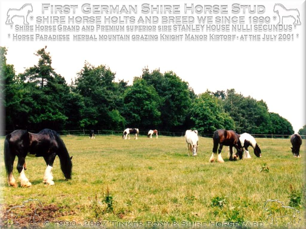 Shire Horse Grand & Premium Sire Stanley House Nulli Secundus with his herd into the August 2001 in the knight manor Lehrbach.