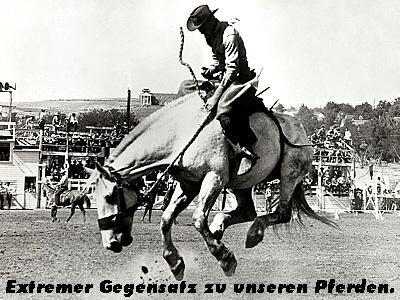 rodeo1.jpg (39155 Byte)