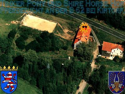 Heartily welcome on the former Gypsy Cob and Shire Horse yard. - Shire Horse Premium Zuchthengst Stanley House earl Secundus mit seiner Herde im  August 2001 im Pferdeparadies auf dem Shire Horse Zuchtgestüt des Rittergutes Lehrbach